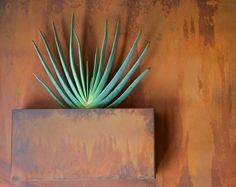 Love this planter of Aloe plicatilis - Fan Aloe   // Great Gardens & Ideas