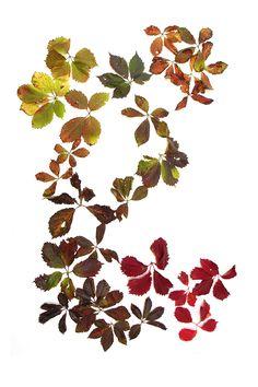 all of autumn on a single vine (mary jo hoffman)