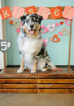 The kissing booth photo experience at Veterinary Specialty Hospital with Laina Colgan Photography was a success! Happy belated Valentine's Day from your friends at FACE!