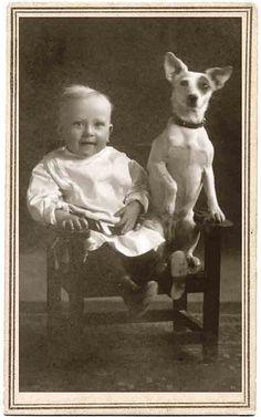 vintage Jack Russel Terrier