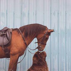 La fotografa di Washington Stasha Becker ha creato una serie accattivante di foto su Instagram di suo figlio Julian, 7 anni, i loro due cani Terranova, e i