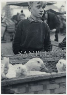 1950s Street Photography Young Boy with Geese  by PictureBook #digitaldownload #streetphotography #vintage #etsy