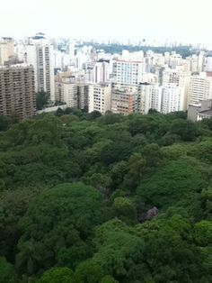 Looks like Central Park...in #Brazil!! Enjoy the green canopy of trees in the middle of the concrete jungle of #SaoPaulo! Catch all the views with your own vacation rental through Vakast!
