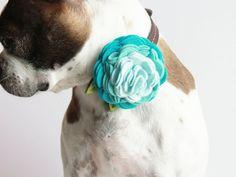 My little Zoey just might need this.  Ombre Rosette Wool Felt Flower Dog Accessories - Wedding Accessories - PICK YOUR COLOR