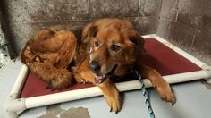 Was rescued on 6/28 :-). Sad news she passed in her sleep 6/28 RIP <3 Sadie  15-year-old dog surrendered for being 'too old'   Doesn't sound fair to get rid of her and let her pass on her own poor baby <3 If only I was closer.