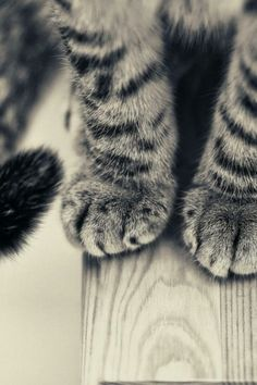 omg I love paws!!  They're so fat and fuzzy and lovable!!!