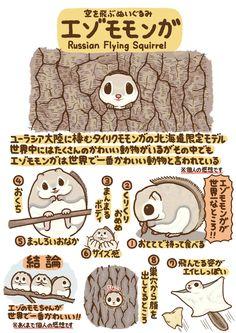 高橋のぞむ@まんがくらぶ11月号 @T_marohiko つぶやきいきもの図鑑 No.17「エゾモモンガ」