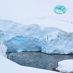 Uma consequência do aquecimento global é o fenômeno do degelo que vem ocorrendo nas calotas polares principalmente nas regiões do Ártico e Antártida. Se o gelo continuar derretendo nessa proporção vai elevar gradualmente o nível do mar e poderá provocar a inundação de cidades litorâneas e morte de diversos animais. Que tal começar a pensar nas consequências dos seus atos hoje? Fontes: Site Brasil Escola Pensamento Verde e http://g1.globo.com #aquecimentoglobal #degelo #antartica #amoomar…