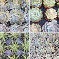 Succulents, Nature, Plants, Flora, Succulent Plants, Plant, The Great Outdoors, Mother Nature, Planting