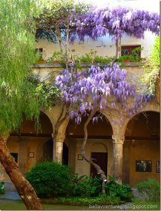 Wisteria in Cloister di San Francesco Sorrento. We got engaged here! So beautiful xx