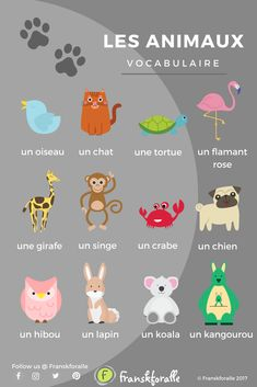 Easy and fun French lessons with infographics and videos. You can enjoy your cup of French wherever you want and at your own pace. Basic French Words, French Phrases, French Language Lessons, French Lessons, Spanish Lessons, Spanish Language, Study French, French Kids, Learn French Fast
