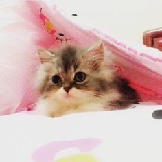 From @poppyjessica_  #cutecatskittens #cat #love #cats #instacat #instacats #catstagram  #cats_of_instagram #catsofinstagram #meow #animals #animal #pet #pets #cute #cutecat #kittens #lovecats #instaphoto #awesome #nofilter #followforfollow #follow4follow #picoftheday #kitten #petoftheday #adorable #catlover