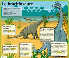 http://www.lepetitquotidien.fr/media/infography/mag/lpq-35/lpq35-le-brachiosaure.jpg