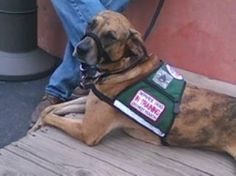 American Humane Association Calls on VA to Support Service Dogs for Veterans with PTSD