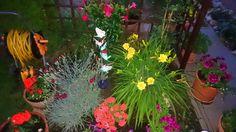 Záhrada ☺