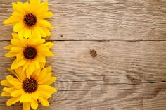Ornamental sunflowers on wooden background Sunflowers Background, Flower Background Wallpaper, Background Pictures, Flower Backgrounds, Photo Backgrounds, Wallpaper Backgrounds, Colorful Backgrounds, Wallpapers, Beautiful Photos Of Nature