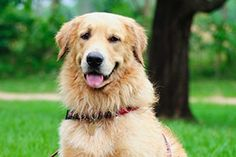 It's hot out there! And if your Golden Retriever or long-haired kitty seems to suffer when the mercury rises, you might