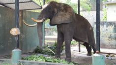 Petition update · The Saddest African Elephant in Asia · Change.org