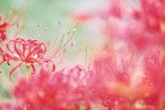 Élénk ornamentika.  Kép forrása: @ayu_n.hina_beam  #nikon #nikond800 #dslr #nikonvagyok #photo #picture #photographer #snapshot #nikongram #photography #mik #ikozosseg #nature #flower #macro #colors  via Nikon on Instagram - #photographer #photography #photo #instapic #instagram #photofreak #photolover #nikon #canon #leica #hasselblad #polaroid #shutterbug #camera #dslr #visualarts #inspiration #artistic #creative #creativity