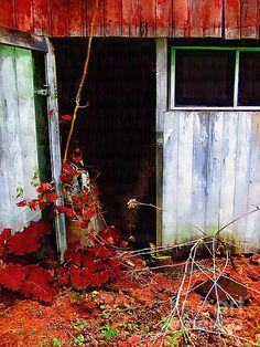 Title  The Shed Out Back In Autumn  Artist  RC deWinter  Medium  Painting - Digital Oils
