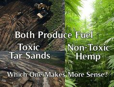 Tar Sands versus Hemp: Which One Makes More Sense? Save The Planet, Medical Marijuana, How To Apply, How To Make, Mother Earth, Awakening, Weed, This Or That Questions, Nature