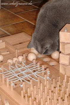 Ein Katzen-Fummelbrett ist eine sinnvolle Beschäftigungsmöglichkeit für Wohnungskatzen und Freigänger und lässt sich mit etwas Geschick selbst bauen.