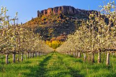 Visit award-winning wineries in Southern Oregon Wine Country. Take a wine tour through the Rogue Valley, Applegate, Bear Creek or Upper Rogue Wine Trails. We invite you to swirl, sip and taste the diversity of Southern Oregon Wines Medford Oregon, Oregon Trail, Oregon Nature, Oregon Wine Country, Table Rock, Family Adventure, Monument Valley, Beautiful Places, Tours