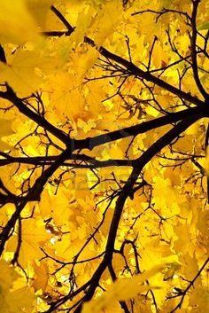 Yellow abstract tree.