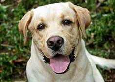"""Favorite dog on """"Lost""""--Vincent"""