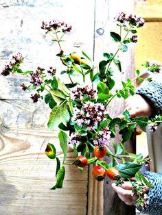 diegutendinge.blogspot.de #plants