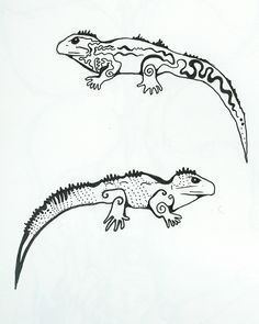 Tuatara Black And White Drawing A (1409×