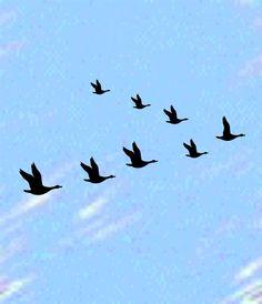 Ducks... geese silhouette
