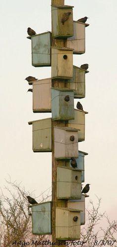 Bird hotel!