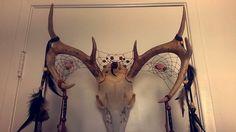 Penrod deer skull dream catcher by desertsunreyes on DeviantArt