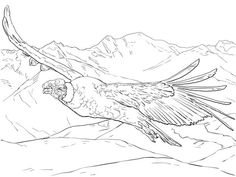 Cóndor andino volando Dibujo para colorear
