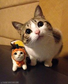 Aww cutie!
