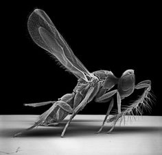Insect Photography with Electron Microscope7