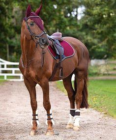 Big Horses, Cute Horses, Horse Love, Horse Girl Photography, Equine Photography, Beautiful Horse Pictures, Beautiful Horses, Reining Horses, Equestrian Girls