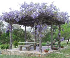 blauregen kletterpflanze gartenlaube esstisch sitzbank sessel