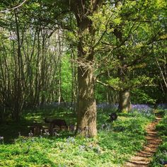 Badgells wood camping south east england kent ....a beautiful place to camp