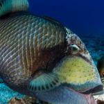 Pestisorriiii!   #fotografie #ocean