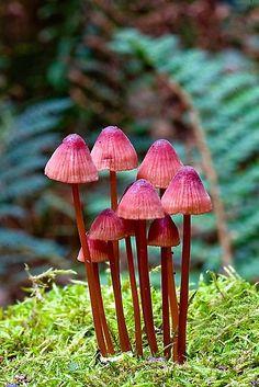 mushrooms <3