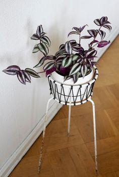 Kirppisrakkautta Flower Pots, Flowers, Planter Pots, Furniture, Home Decor, Flower Vases, Plant Pots, Decoration Home, Room Decor