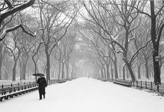 Central Park!!