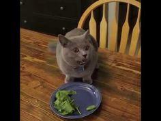 Dagens sjoveste: Om to sekunder gør katten noget meget overraskende, og det er så morsomt