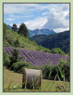 """ Entre Vercors et Provence..."" 