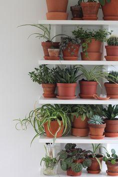 Urban Jungle Bloggers: Plantshelfie 2 by Marie Friis