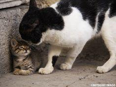 世界で活躍する動物写真家・岩合光昭。40年以上撮影を続けるネコについて、「ネコの動きをみれば、ヒトの動きがみえてくる」と語ります。ヒトが歩む道はネコも一緒についてくる。ヒトの生き方や暮らし方がネコにも