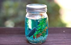 hello, Wonderful - MAKE A MASON JAR AQUARIUM