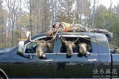 human hunting!